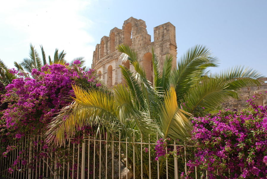 Architecture Blooming Blue Built Structure Day El Jem Flower Green Color Growth Low Angle View Nature No People Outdoors Plant Sky Tourism Travel Destinations Tree Tunisia