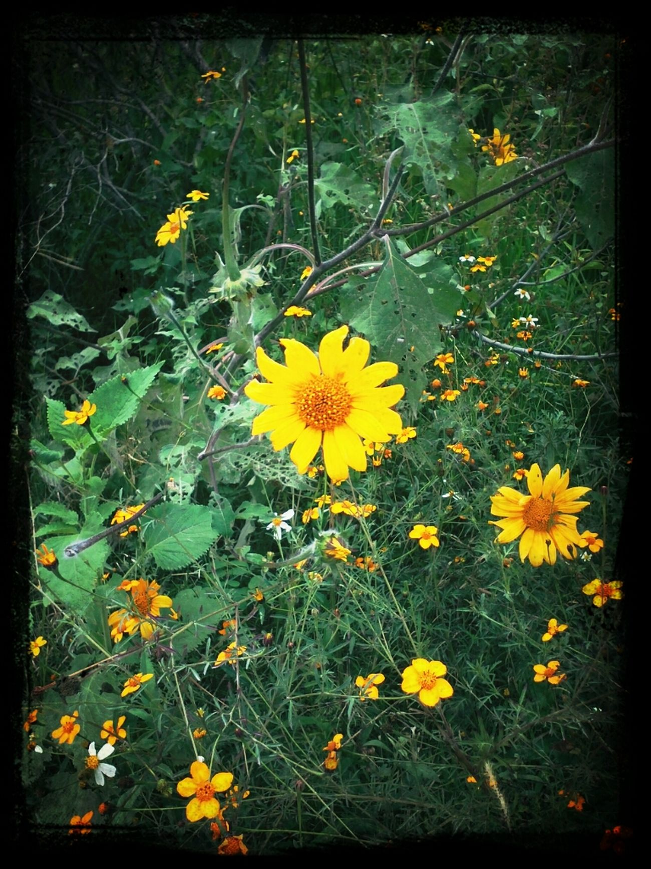 Flower Mexico De Mis Amores Mexico Y Su Naturaleza El Cielo Y La Tierrra.
