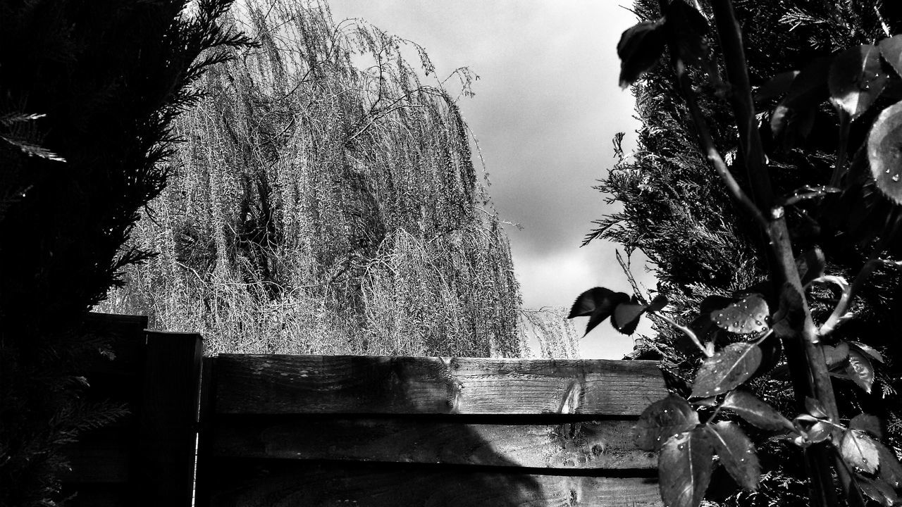 The fence. Fence Plants Garden Wood Close-up Nature Landscape Black And White Photography Monochrome Monochromatic
