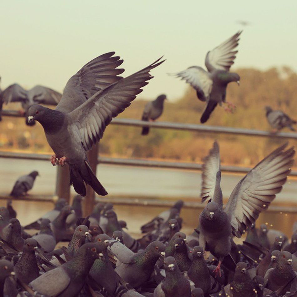 Not coz this pic it's great. But only for you :P @vidhatri_sub :P Pigeon Photography Live Love Morning Earlymorning  Birds Pigeons Followgram Followme Tagsforlikes Followed Cool Walk Morningwalk Lovelyweather  HASHTAG Mustaffa