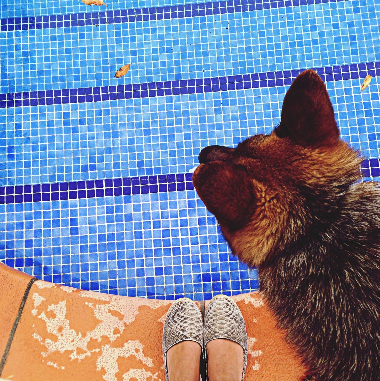 Beautiful stock photos of pool, Animal Hair, Animal Themes, Blue, Cropped