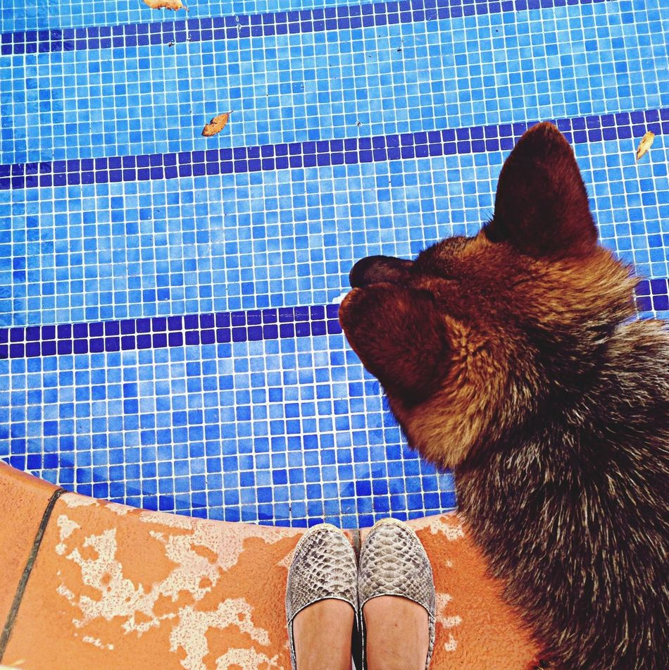 Beautiful stock photos of pools, Animal Hair, Animal Themes, Blue, Cropped