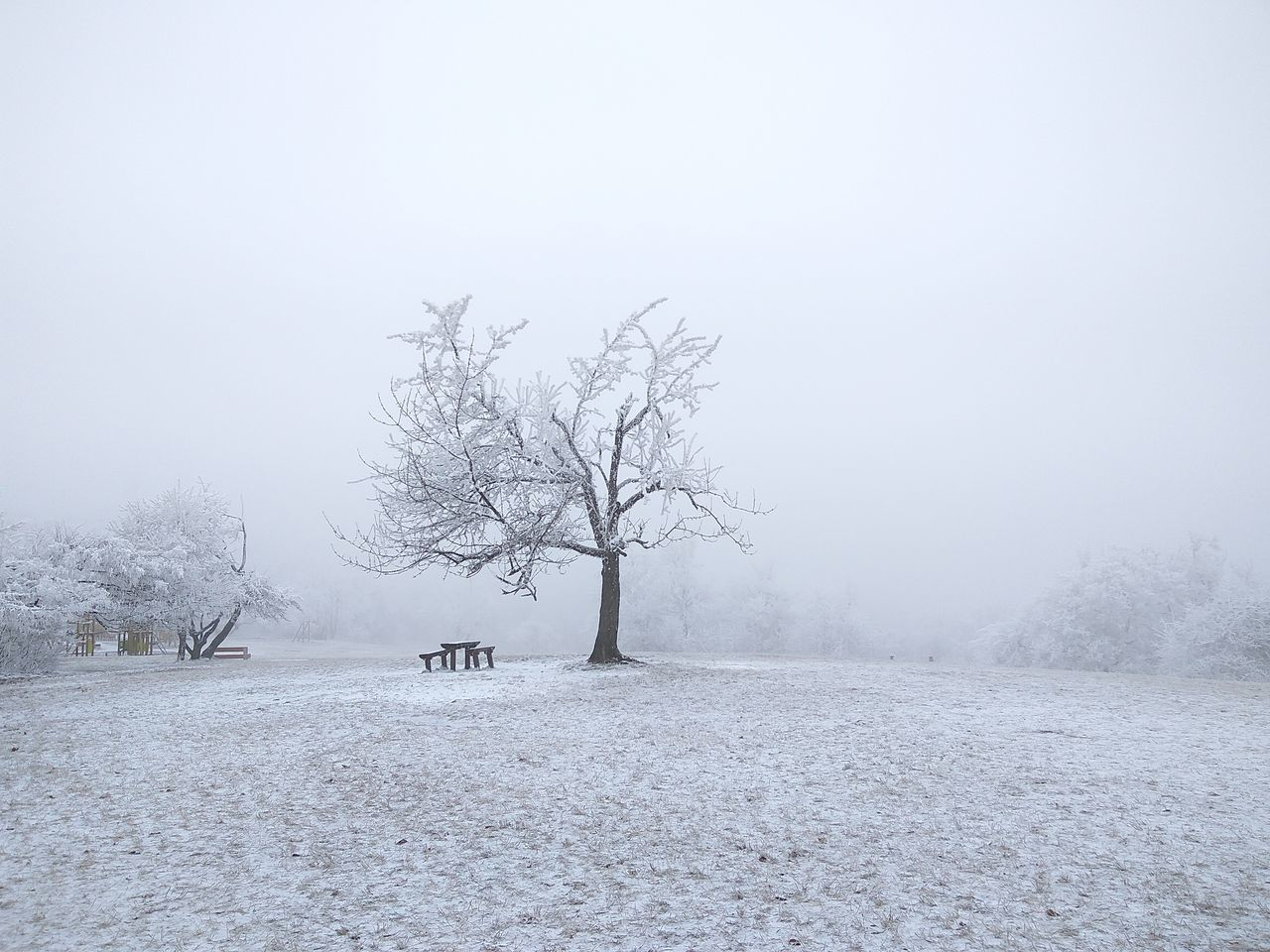 snow Bare Tree No People Tree Nature Cold Temperature Day Sky Beauty In Nature Outdoors Xiaomiphotograph Normafa Hungary Beauty In Nature Backgrounds Tree Weather Snowing