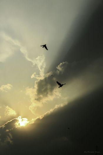 Pakistan Sunraysthroughtheclouds Bluesky Beautiful Nature Beautiful Moments Subhanaallah ♥ Wonderful Sunrays_through_clouds Sky_watchers Nature Naturelovers Beautiful Birds In Flight Birds_in_the_sky
