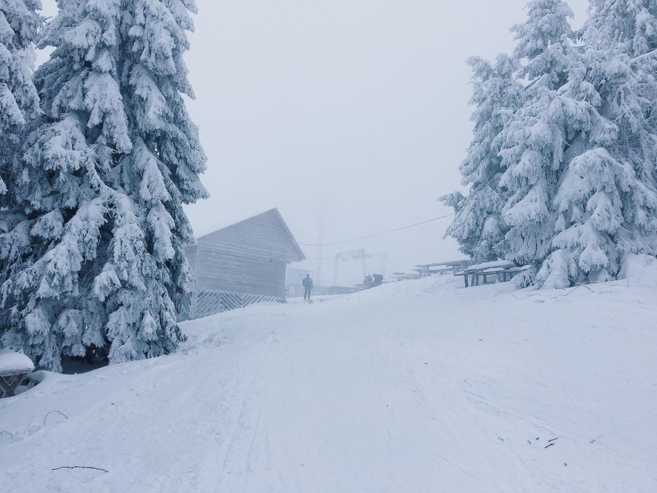 Winter Snow Cold Temperature Weather Built Structure White Color House Nature Building Exterior Architecture No People Tranquility Tranquil Scene Landscape Beauty In Nature Outdoors Tree Day Snowing