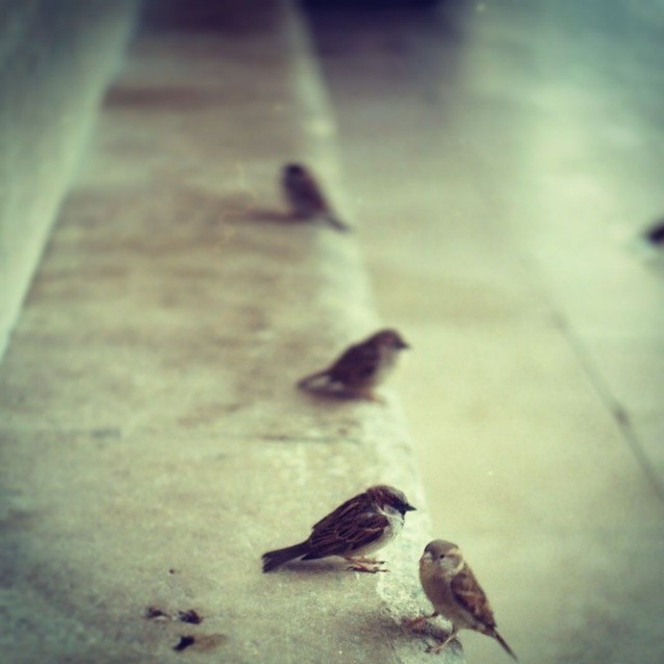 Birds on Stairs Animal EarthInstagram picofday instapic