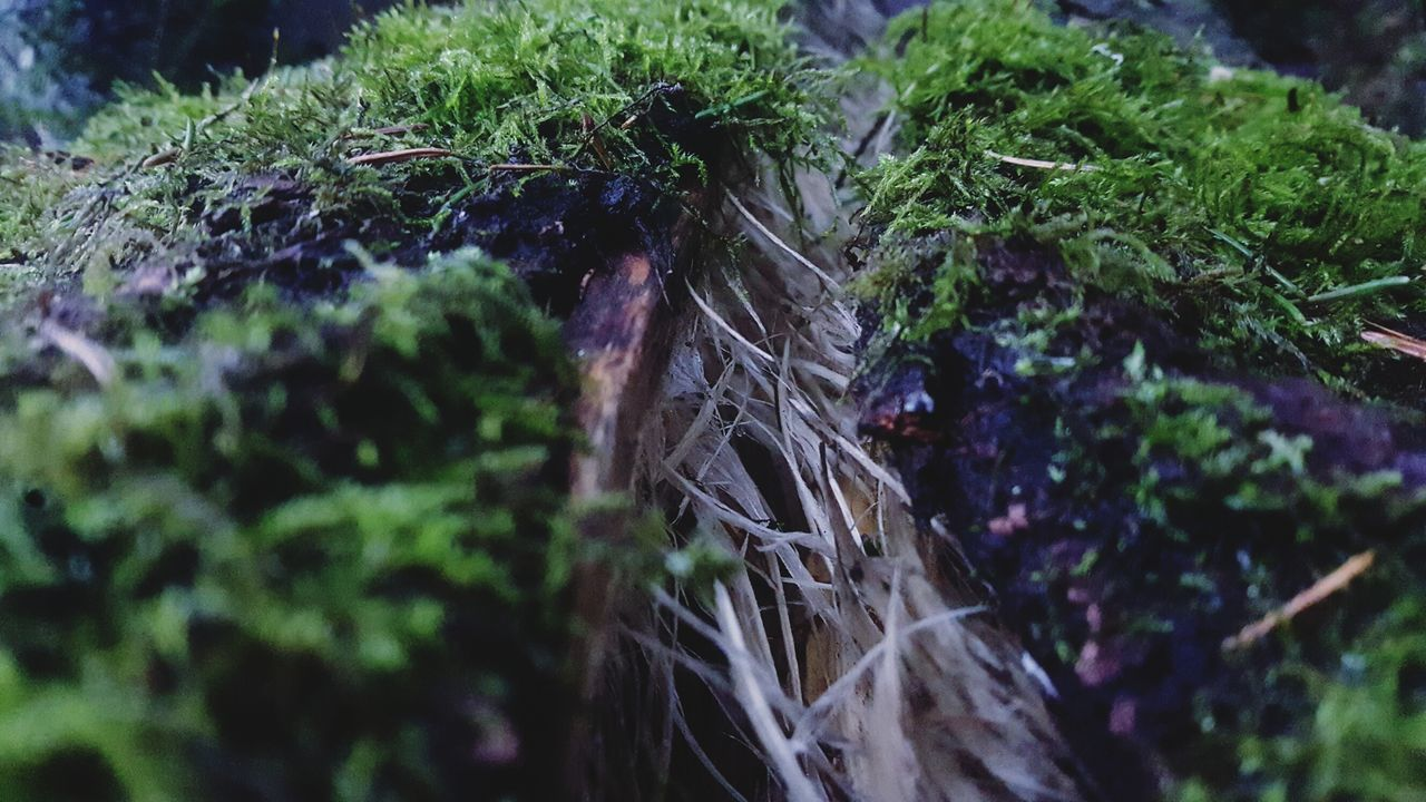 nature, selective focus, plant, growth, no people, day, green color, outdoors, close-up, grass, beauty in nature, freshness