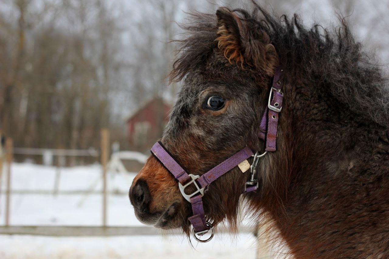 Beautiful stock photos of pony, Animal, Balanced, Close-up, Curious