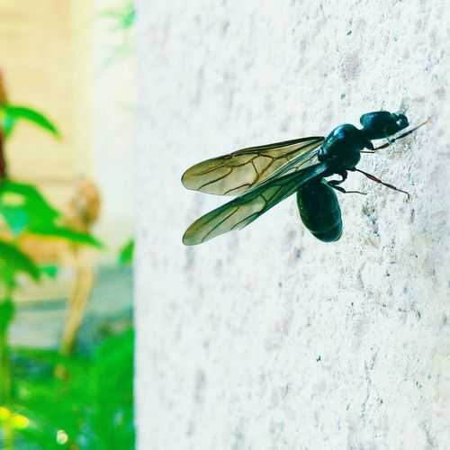 Macro Photography Insects  Macro Insects EyeEm Best Shots Photography