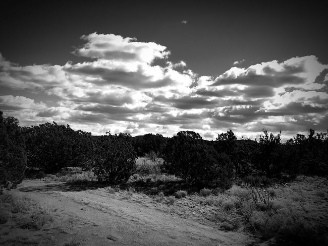 """""""A Road Less Traveled Under The Clouds"""" New Mexico Photography New Mexico Skies New Mexico Clouds And Sky Clouds Dirt Road Black And White Photography Black & White Blackandwhite Nature Sky Scenics Cloud - Sky No People Landscape"""