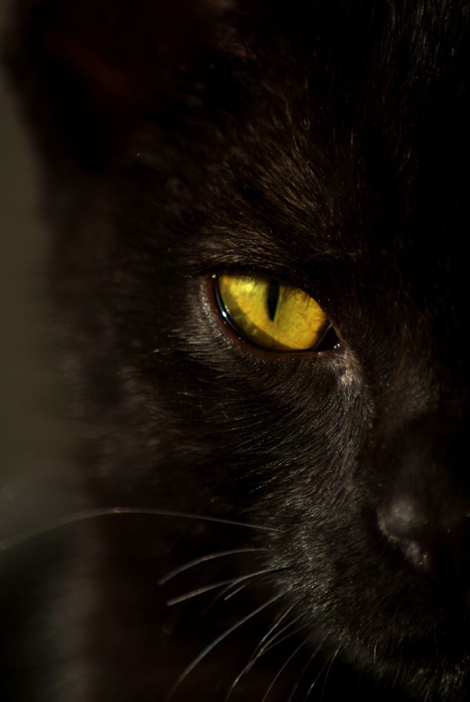 Beautiful stock photos of gothic, Alertness, Animal Body Part, Animal Eye, Animal Themes