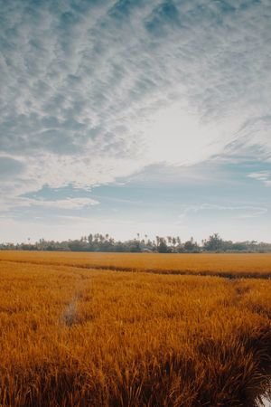 Field Agriculture Landscape Nature Crop  Tranquility Rural Scene Growth Sky Tranquil Scene No People Beauty In Nature Scenics Outdoors Cereal Plant Day EyeEm Ready
