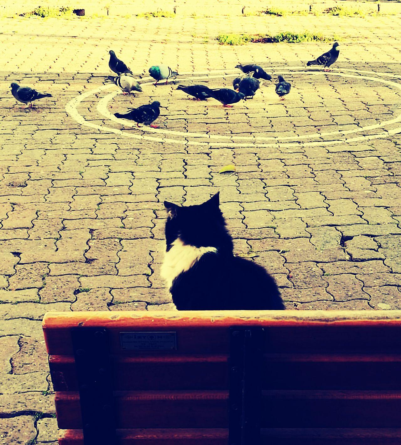 Pets Animal Themes Outdoors No People City Life
