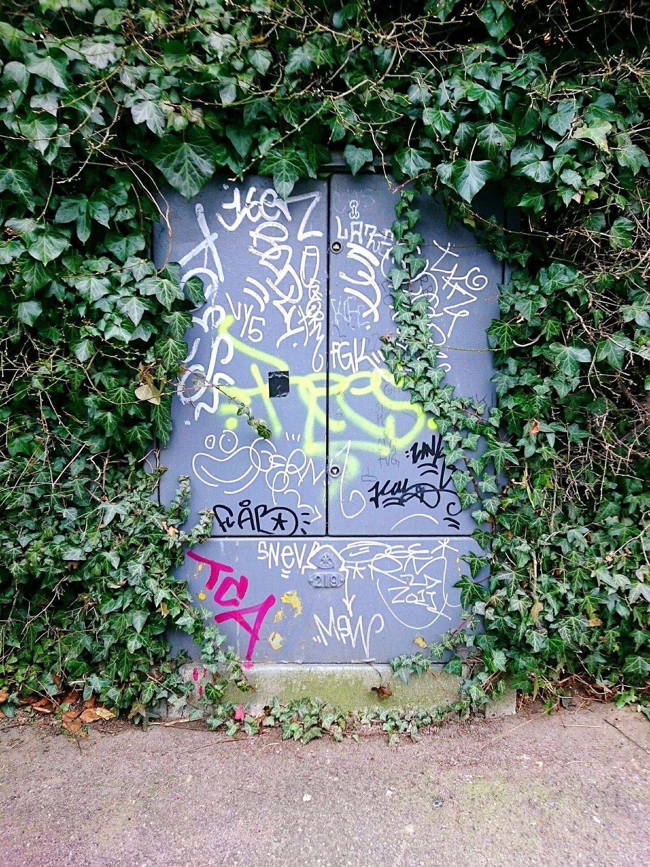 Graffiti Green Leaves Textures And Surfaces Takeover Naturevsmanmade Upclose Street Photography Manvsnature  Aerosol Spraypaint Urban Landscape The Street Photographer - 2016 EyeEm Awards