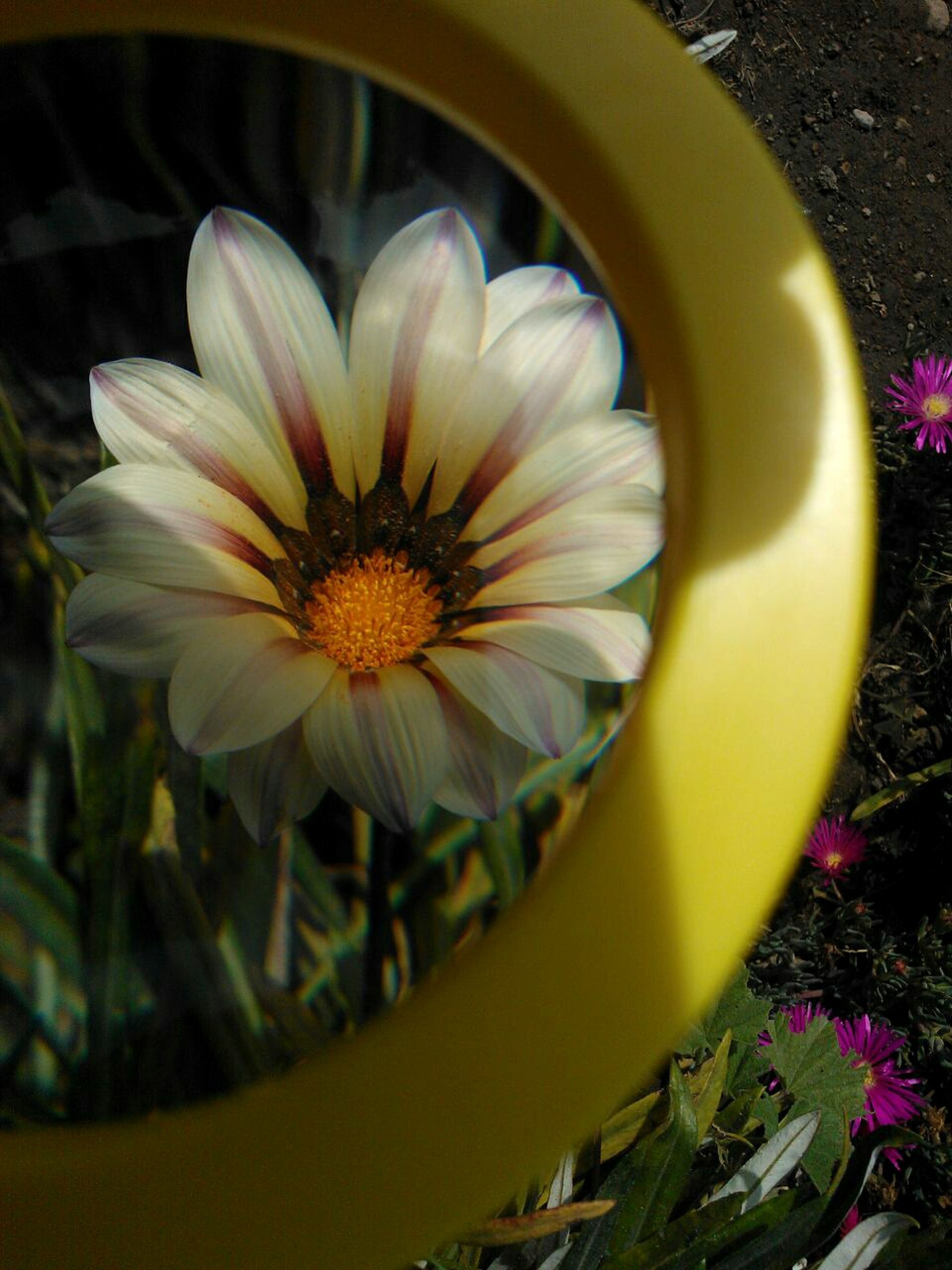 flower, petal, fragility, freshness, flower head, growth, nature, beauty in nature, yellow, blooming, day, plant, outdoors, no people, close-up, stamen, gazania, crocus