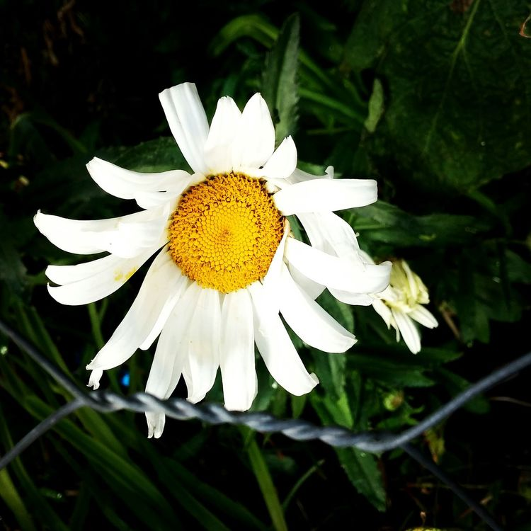 My Smartphone Life Simple V.M Nature Village Life Flower First Eyeem Photo Turkey EyeEm LoveNature