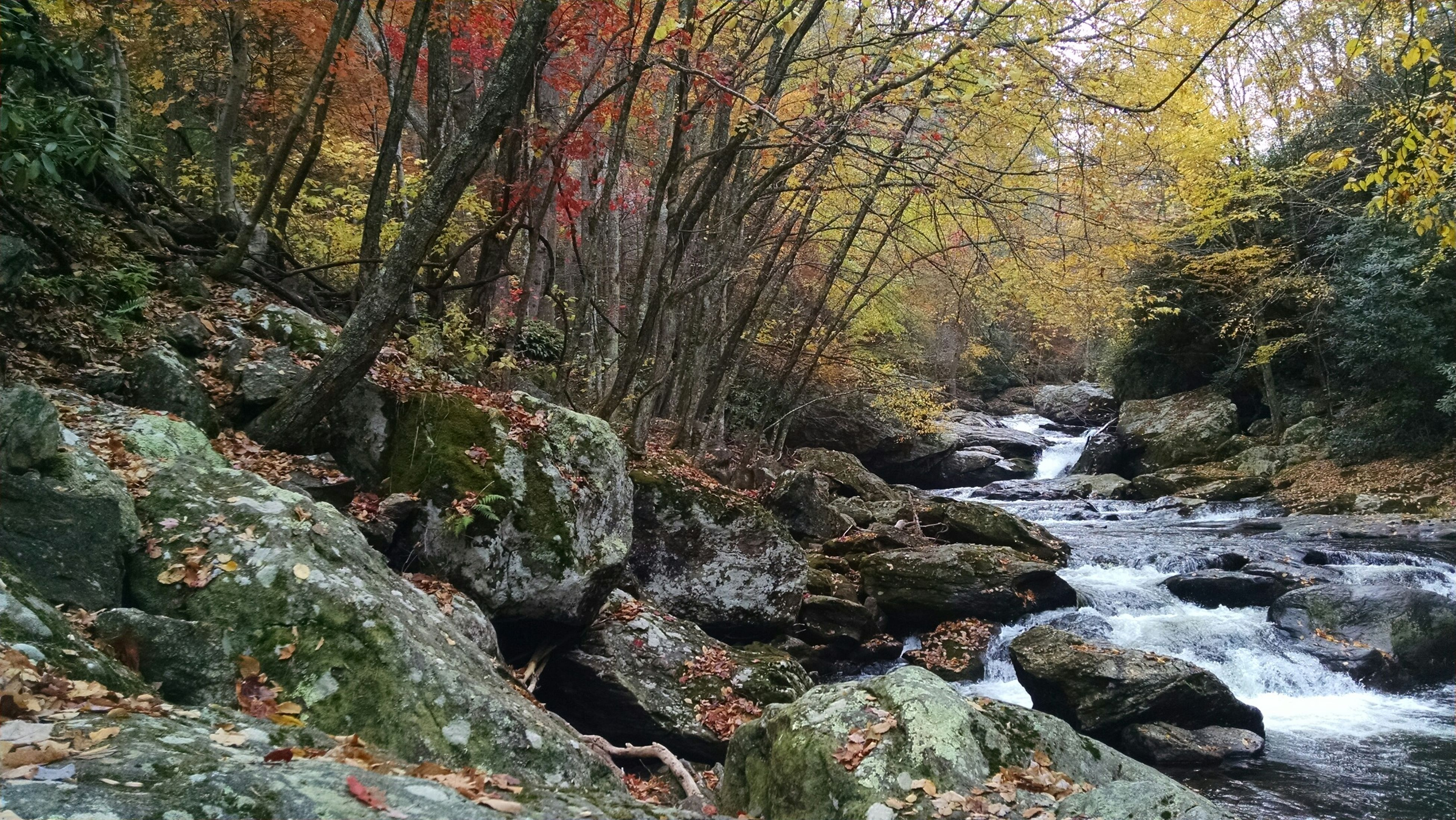 water, tree, rock - object, nature, beauty in nature, scenics, tranquility, stream, forest, tranquil scene, rock formation, rock, river, flowing water, flowing, growth, moss, day, no people, outdoors