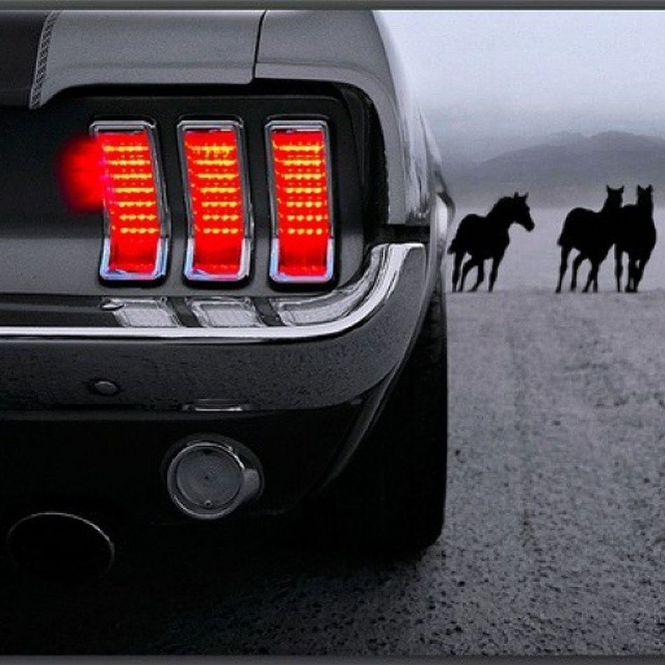 Mustang Ford 67mustang Shelby  classic cars old horsepower horse b&w
