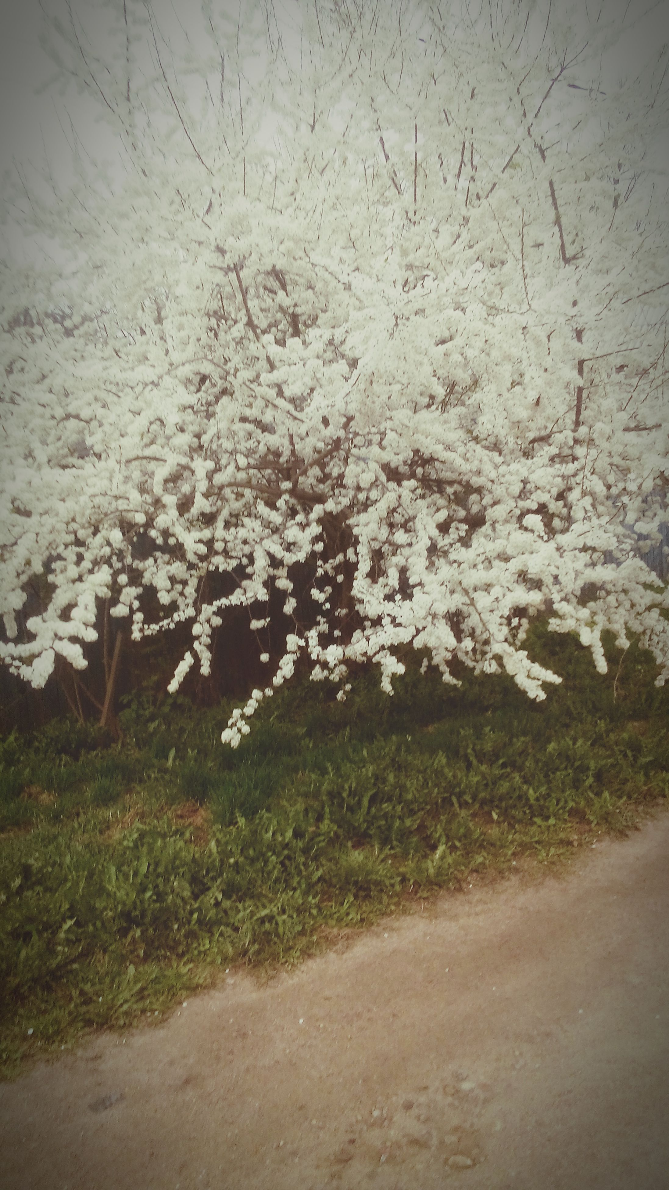 nature, field, winter, white color, growth, grass, cold temperature, snow, tranquility, beauty in nature, plant, season, day, flower, tree, no people, weather, outdoors, branch, road
