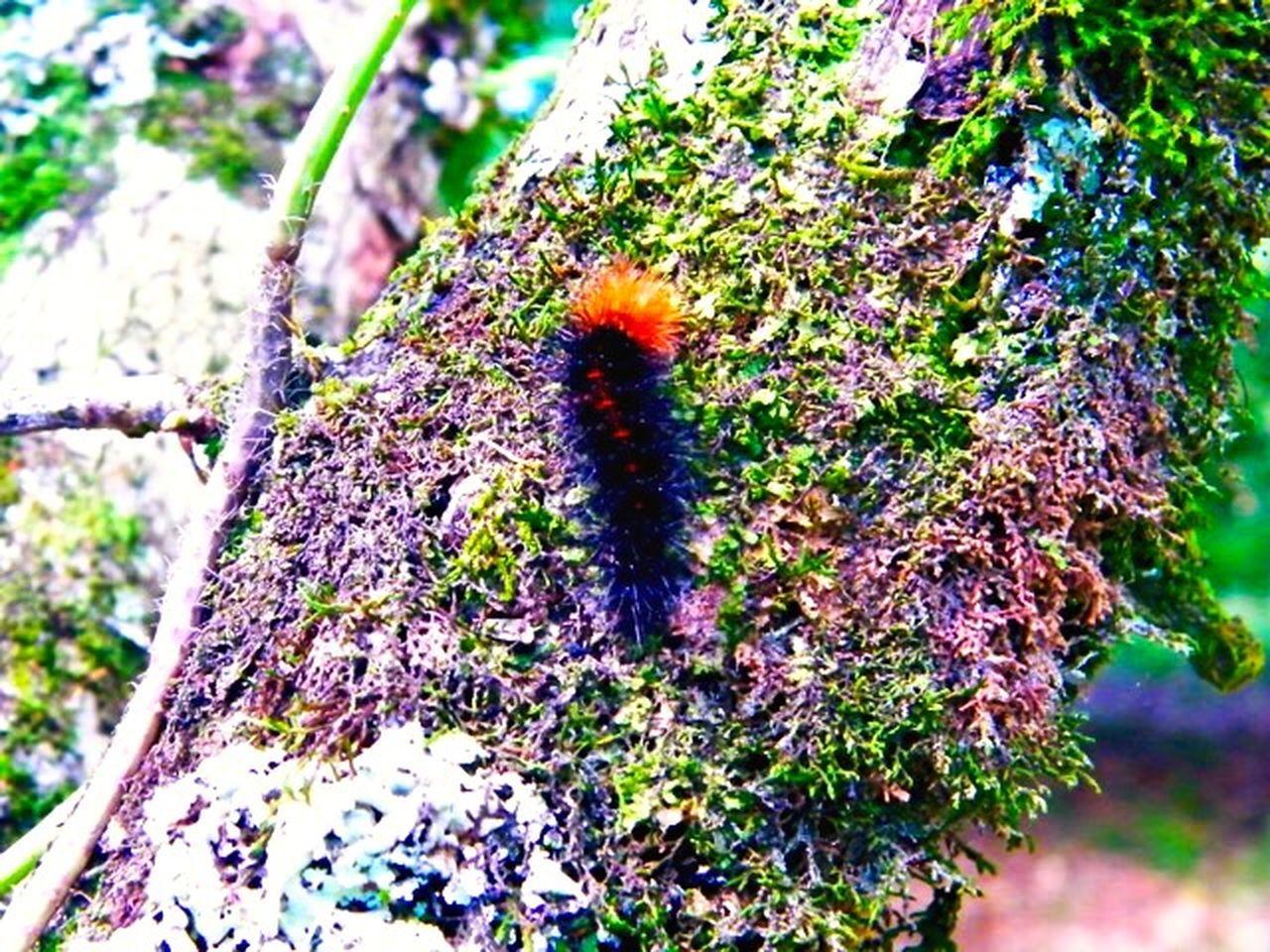 Nature_collection Smart Simplicity Beautiful Nature Tree Caterpillar beautiful and dangerous Dangerous Caterpillar
