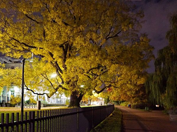 Paint The Town Yellow Tree Autumn Branch Nature Outdoors Yellow No People Beauty In Nature Growth Illuminated Day Sky