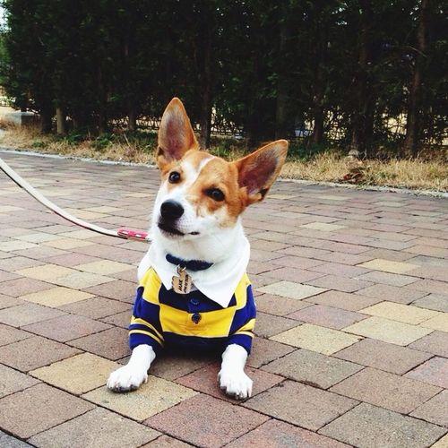 Max Takahashi Jrt Jackrussell Dog