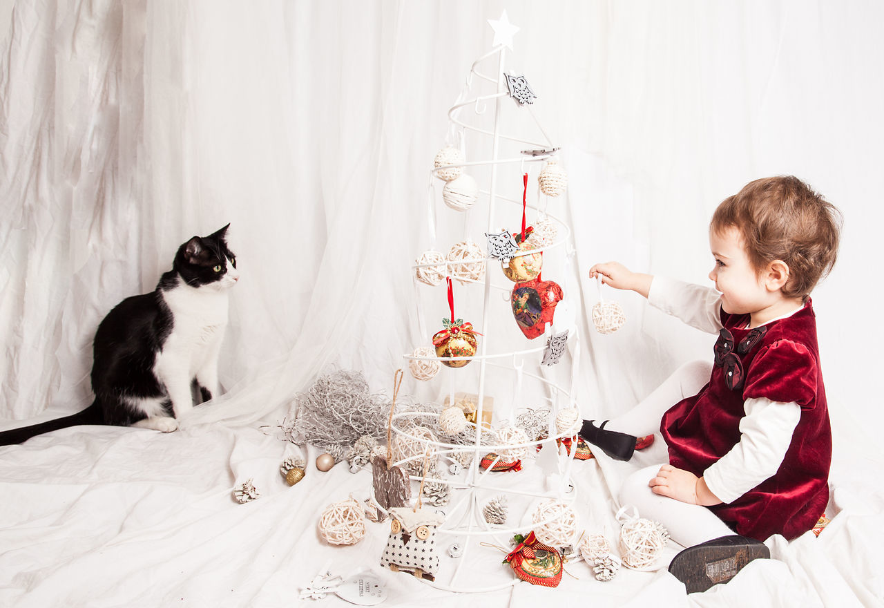 Beautiful stock photos of weihnachtsbaum, indoors, domestic animals, domestic cat, girls
