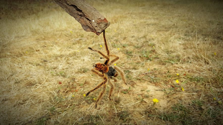 We are on the brink Spider Nature Tranquility Notfilter Equilibrium Eight Legs Perfect Moment Wild Summer Goodmemories South Of Chile Scared Country Good Life Quiet Places Force Of Nature