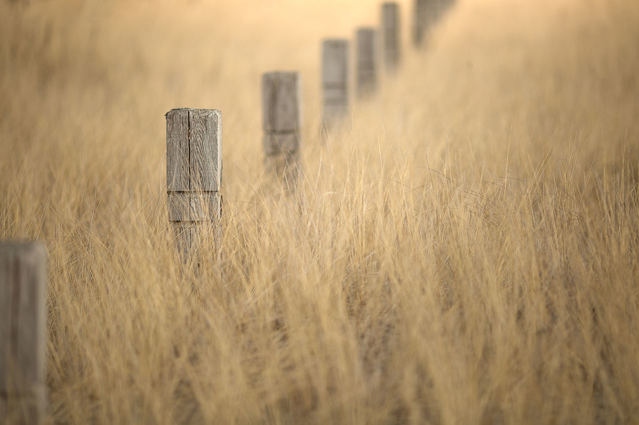 Agriculture Beauty In Nature Day Fence Fencepost Field Grass Growth Landscape Nature No People Outdoors