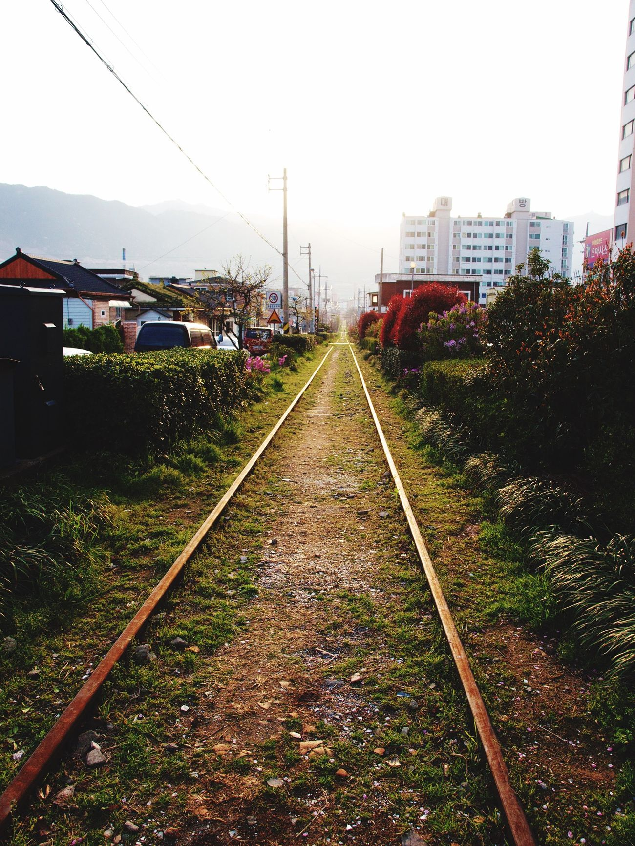 Jinhae Spring April Railway Sunrise Sunshine Taking Photos Olympus E-P3 14-54mm II Traveling