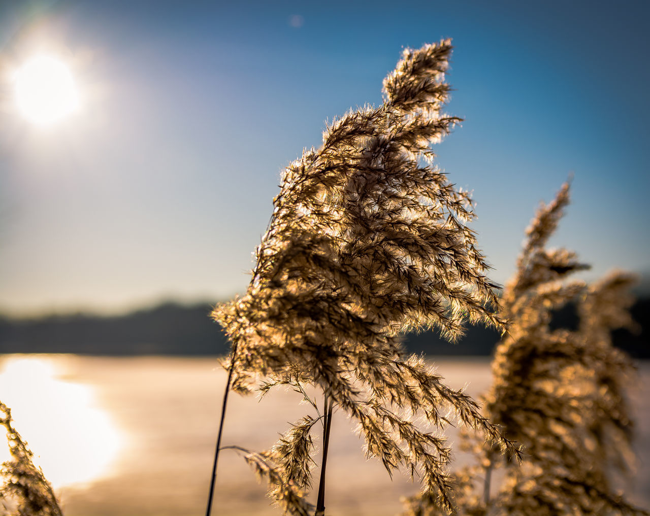 Sky Nature Sunlight Water No People Clear Sky Sunset Vacations Outdoors Lake Landscape Tree Grass Close-up Day Sun View Natural Beauty Nature_collection Landscape_collection EyeEmNatureLover Sunlight Nature Photography Flower Head Growth Freshness Flower