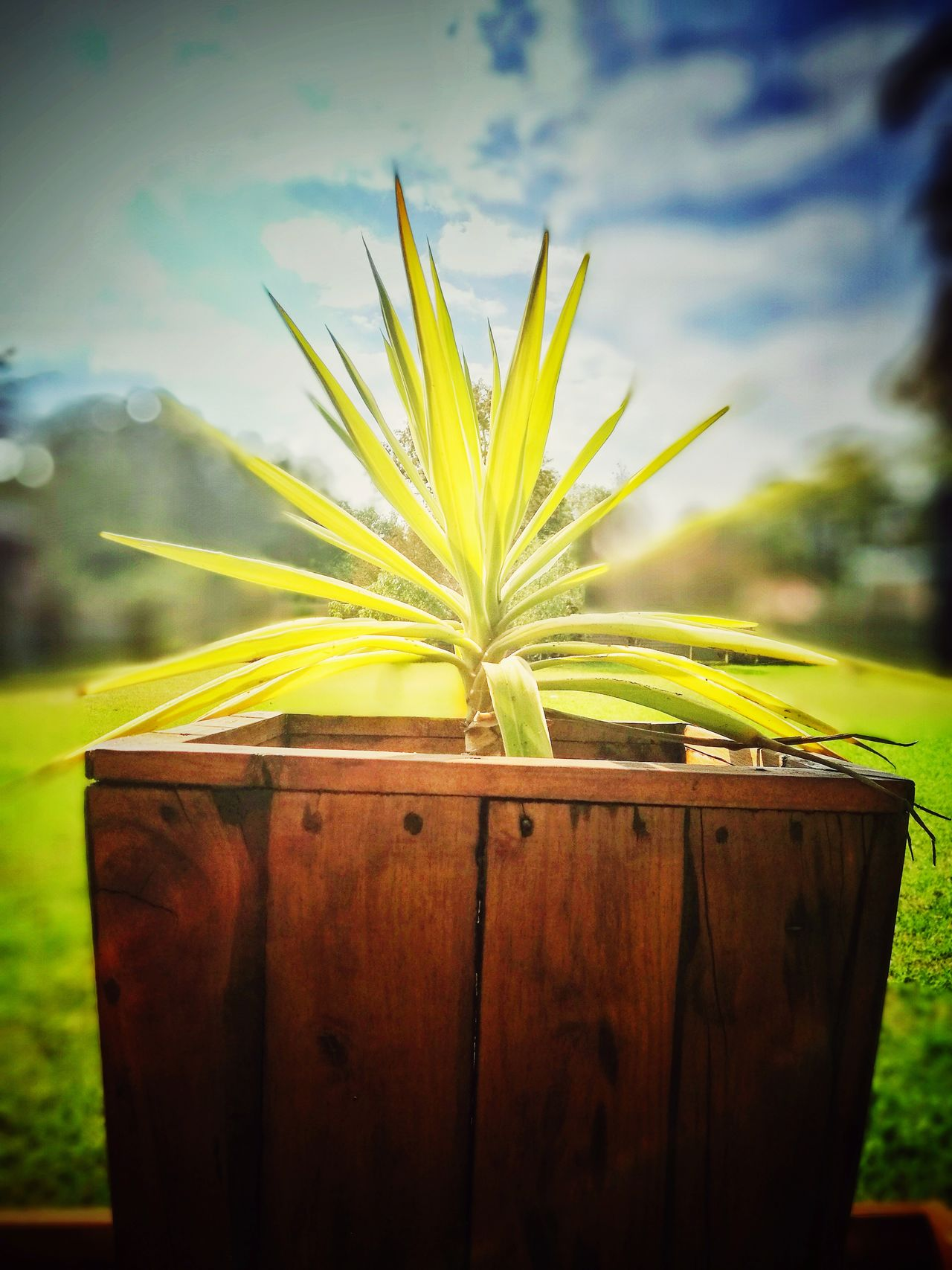 Garden pot Green Color Nature Outdoors Flower Freshness Close-up Beauty In Nature Sky No People