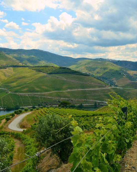 Wine not visit Douro? Wine Not Portwine Landscape Beauty In Nature Sky Cloud - Sky Nextstopdouro Discovery Portugal Wanderlust Nature Perspective Photography Wanderlust From My Point Of View Douro, Portugal Douro Valley Travel Destinations Oporto, Portugal Winelover Douro Wine