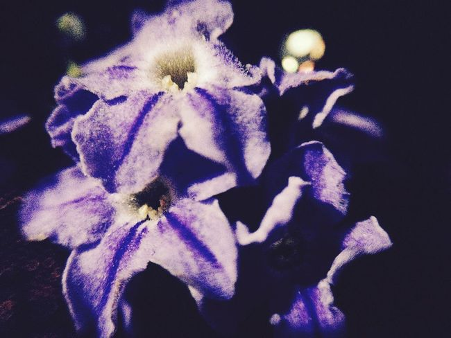 Purple Flower Flowerbloom Macrolens Cliplens PhonePhotography Iosphotography IPhoneography Macro Photography Checkitout Purple Macro_collection Philippines