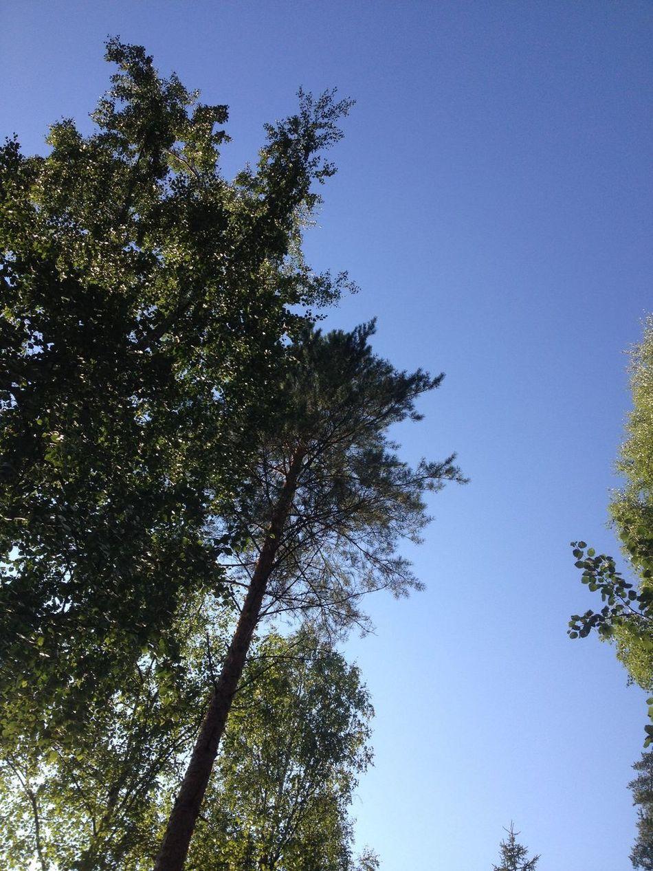 Finland Tree Sky Nature