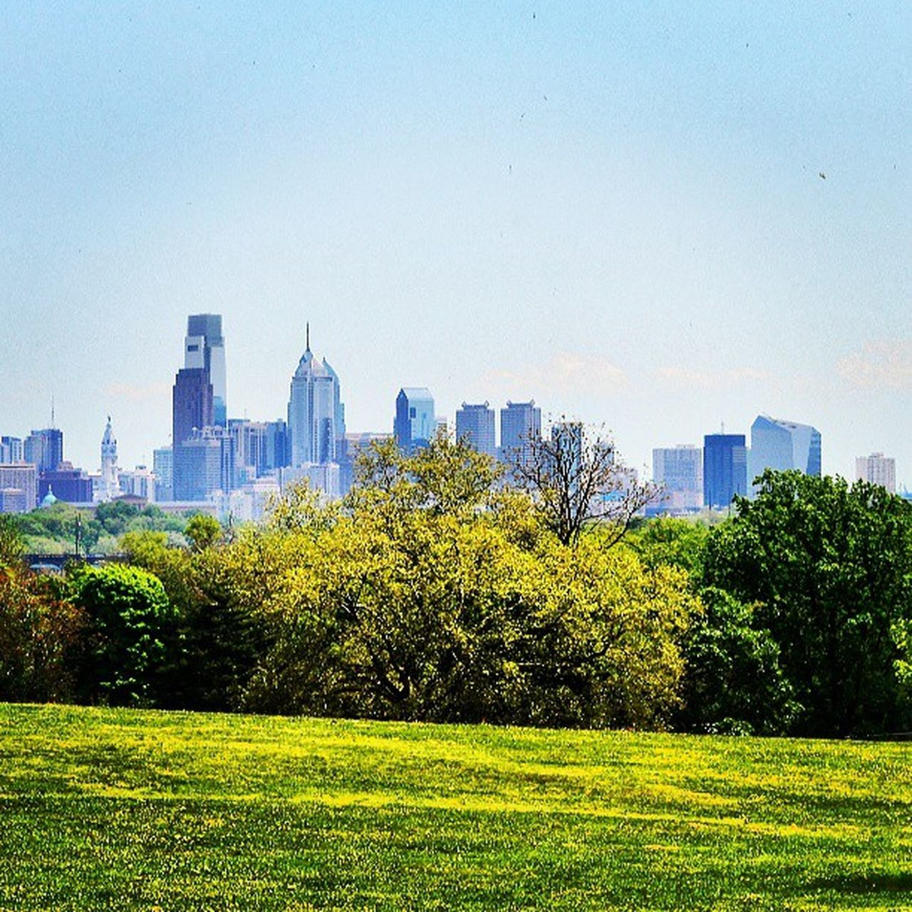 Igers_philly Phillygram Philly Philadelphia park trees skyline blueskies