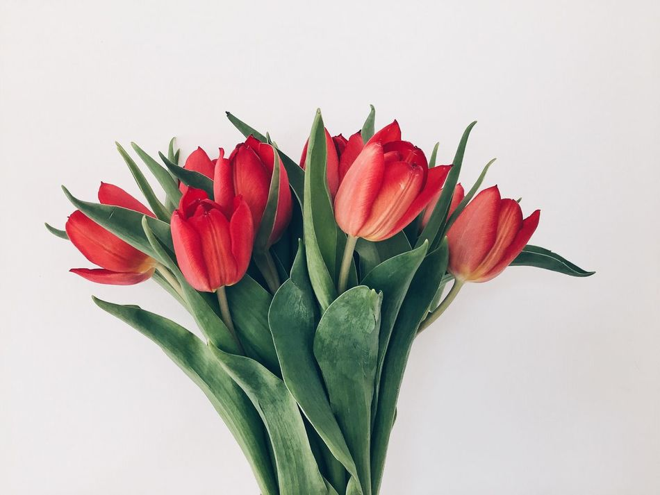 Beautiful stock photos of tulip, Beauty In Nature, Bunch Of Flowers, Close-Up, Flower