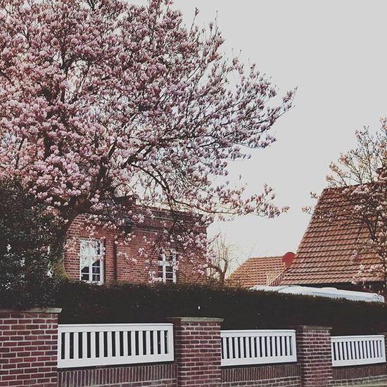 / Was man einfach für schöne Gegenden in der Nähe hat. Augen auf beim Spaziergang.😊😄💕🐕 Wonderful Loveit Goforawalk Missmiles Schöneswetter Homelove