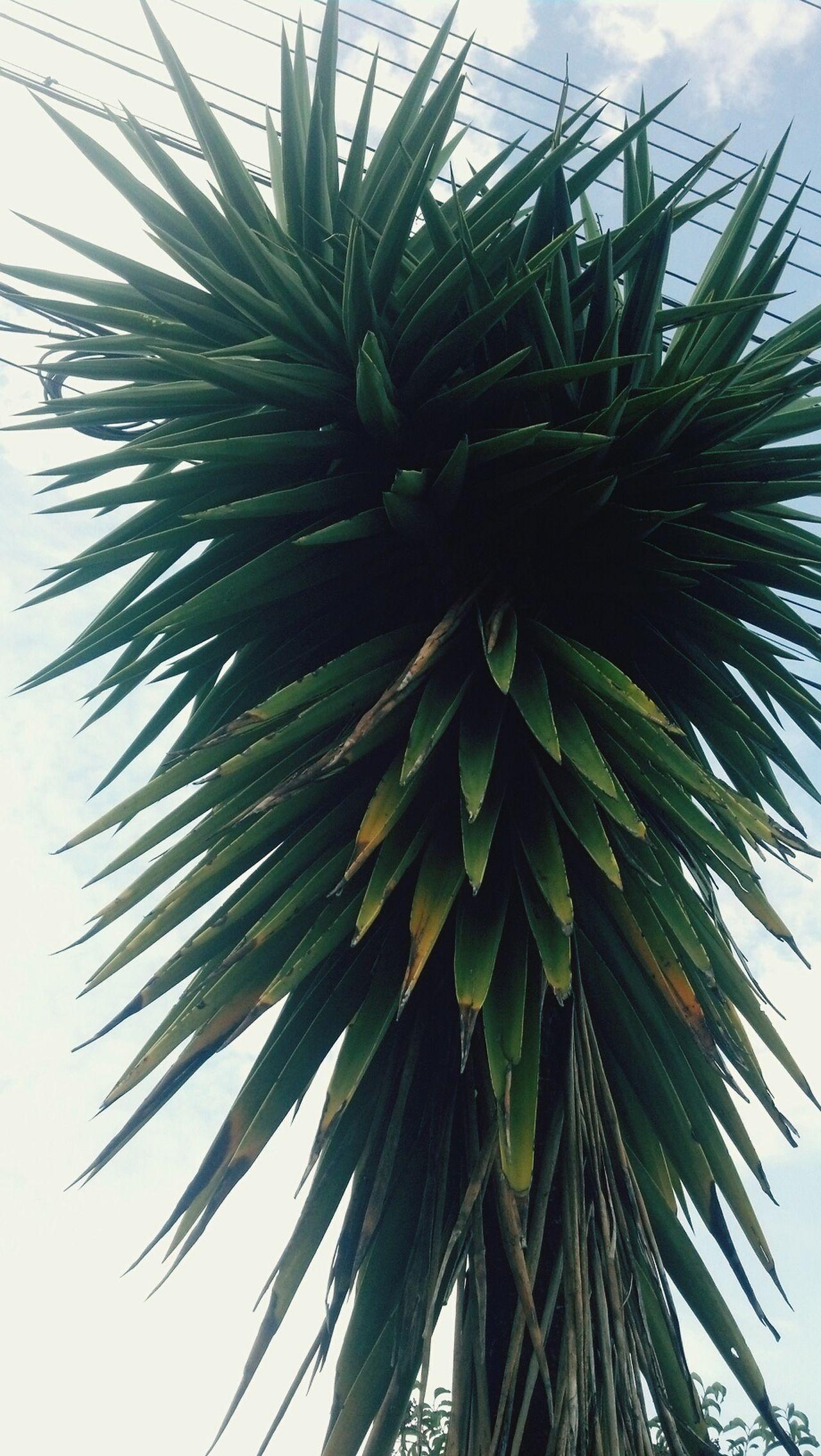 árvores Plants Planta Nature Natureza🍁 Natureza