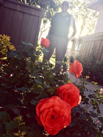 Gentle Giant Garden Photography Rose - Flower Grandfather Light And Shadow Rays Of Sunlight