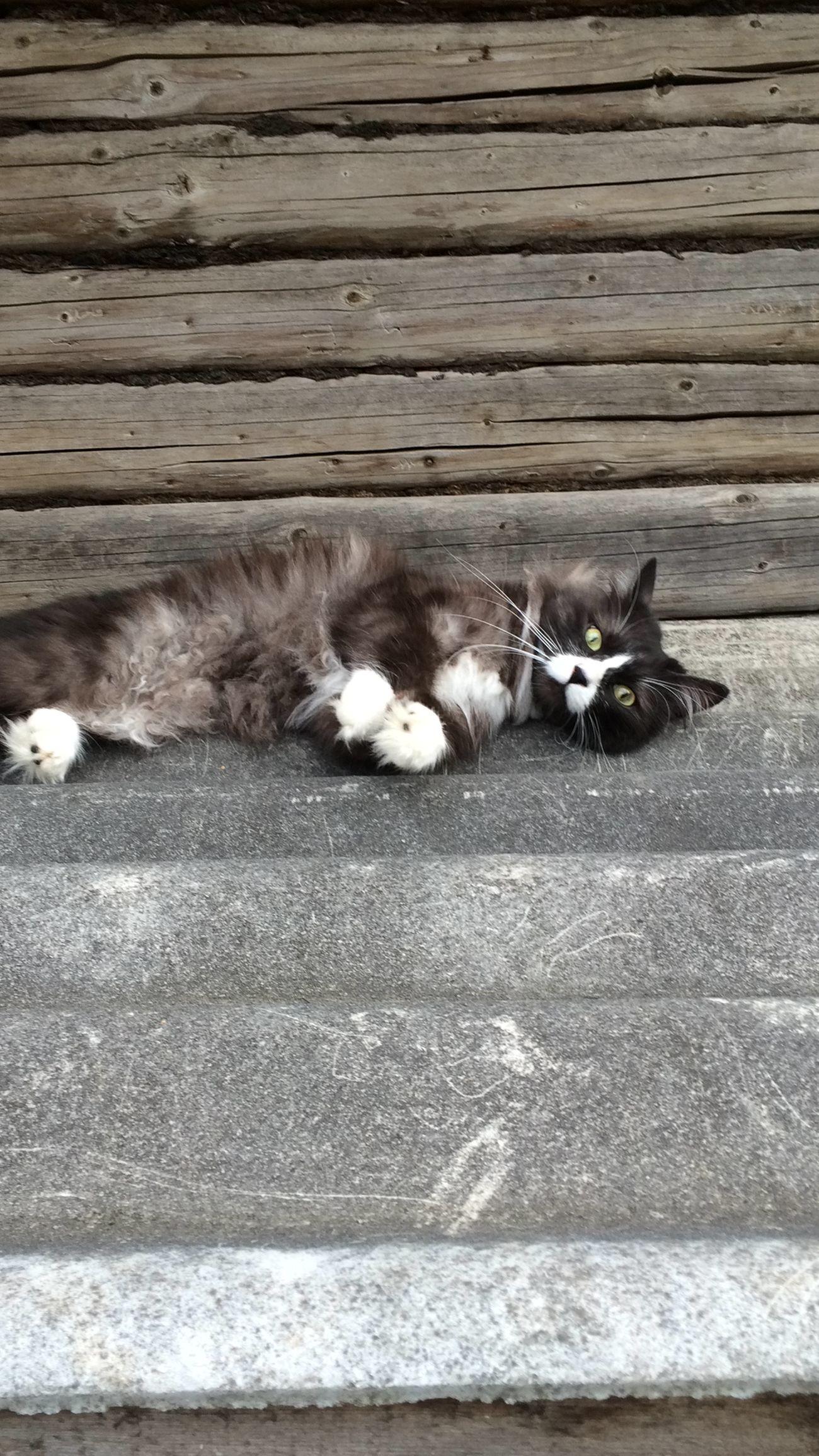 Валямба-Балдемба!😻😻😼 Relaxing