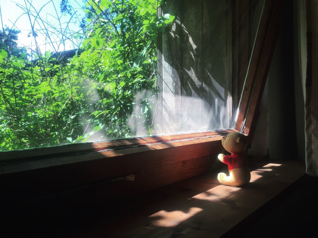 Teddy bear Window Human Representation Day Sunlight No People Indoors  Nature Water Tree Bear Toy Teddy Teddy Bear Childhood Childhood Memories Alone Lonely Game Windows