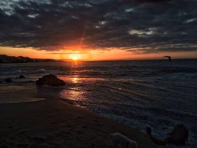 Playa chacalla☀️ Sunset Sea Water Horizon Over Water Beach Scenics Tranquil Scene Beauty In Nature Tranquility Idyllic Shore Nature Wave Sun Calm Orange Color Non-urban Scene Majestic Seascape Sky Atardecer Chile Antofagasta