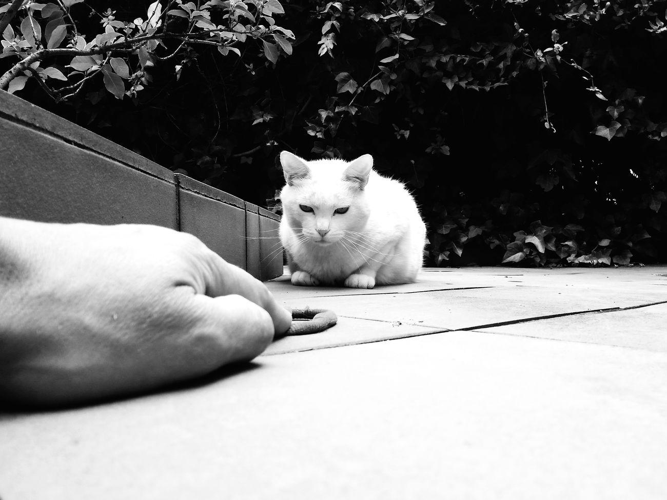 Gato Cat Blackandwhite Blancoynegro