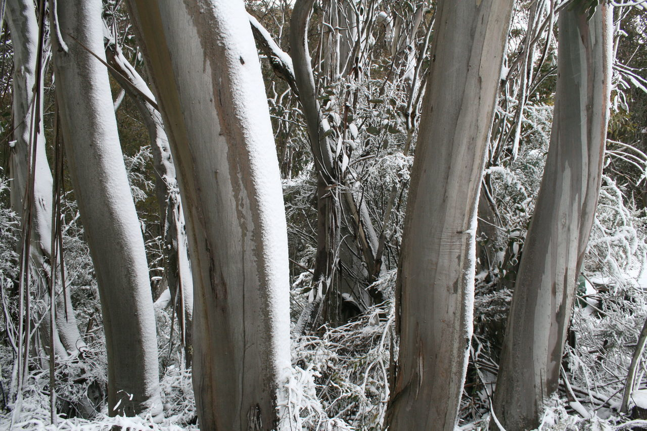 Cold Outside Cold Outside ❄⛄  Cold Temperature Day Forest Growth Nature Nature Nature Photography Nature Reserve Nature_collection No People Outdoors Snow Snow Covered Snow ❄ Tree Tree Trunk Trucks White Winter