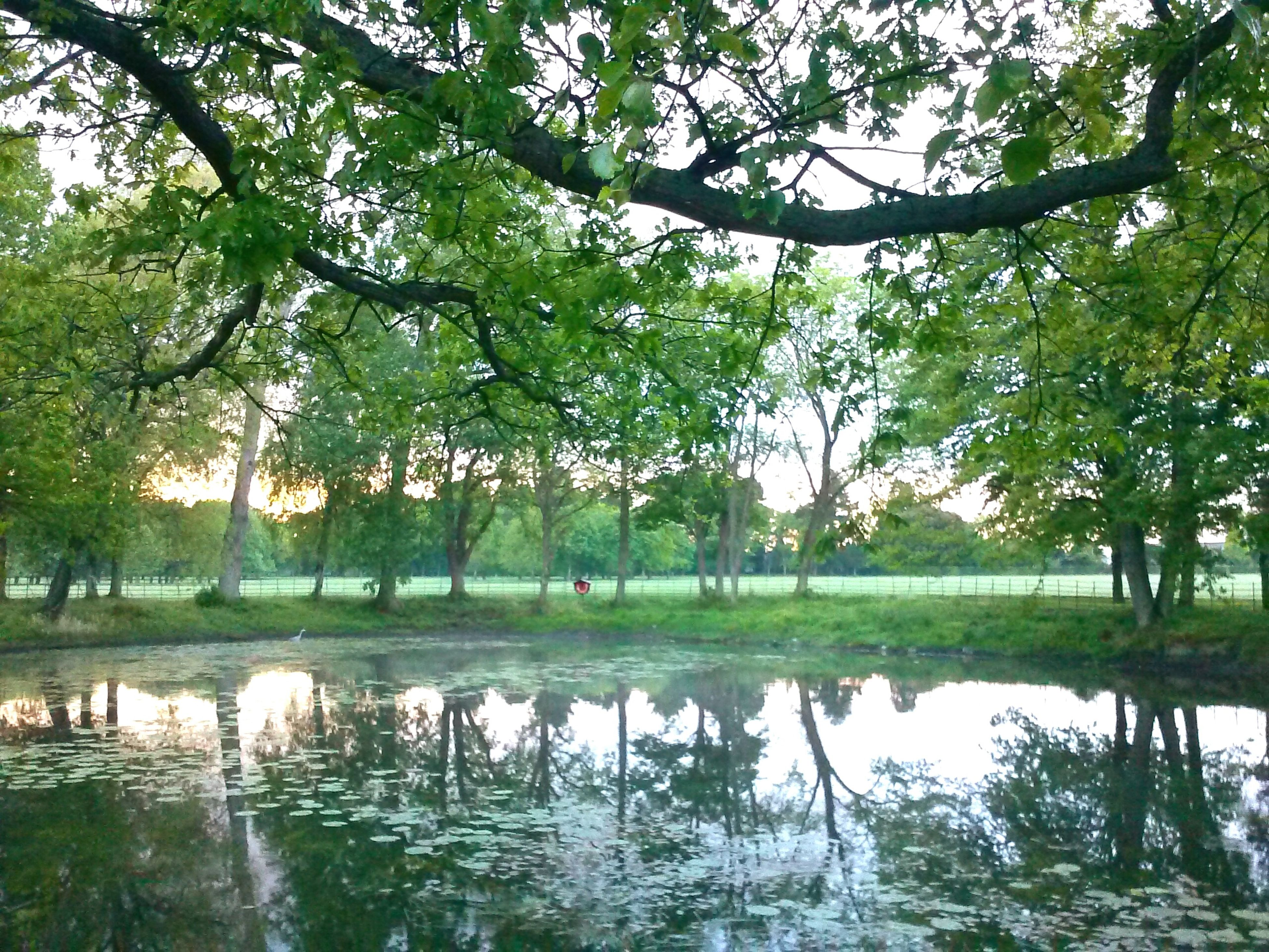 tree, nature, reflection, water, beauty in nature, lake, tranquility, tranquil scene, outdoors, scenics, branch, day, green color, growth, grass, no people, swimming, scenery, sky