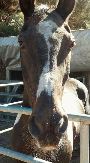 Horse Brown Eyes Staring.. Horseback Riding