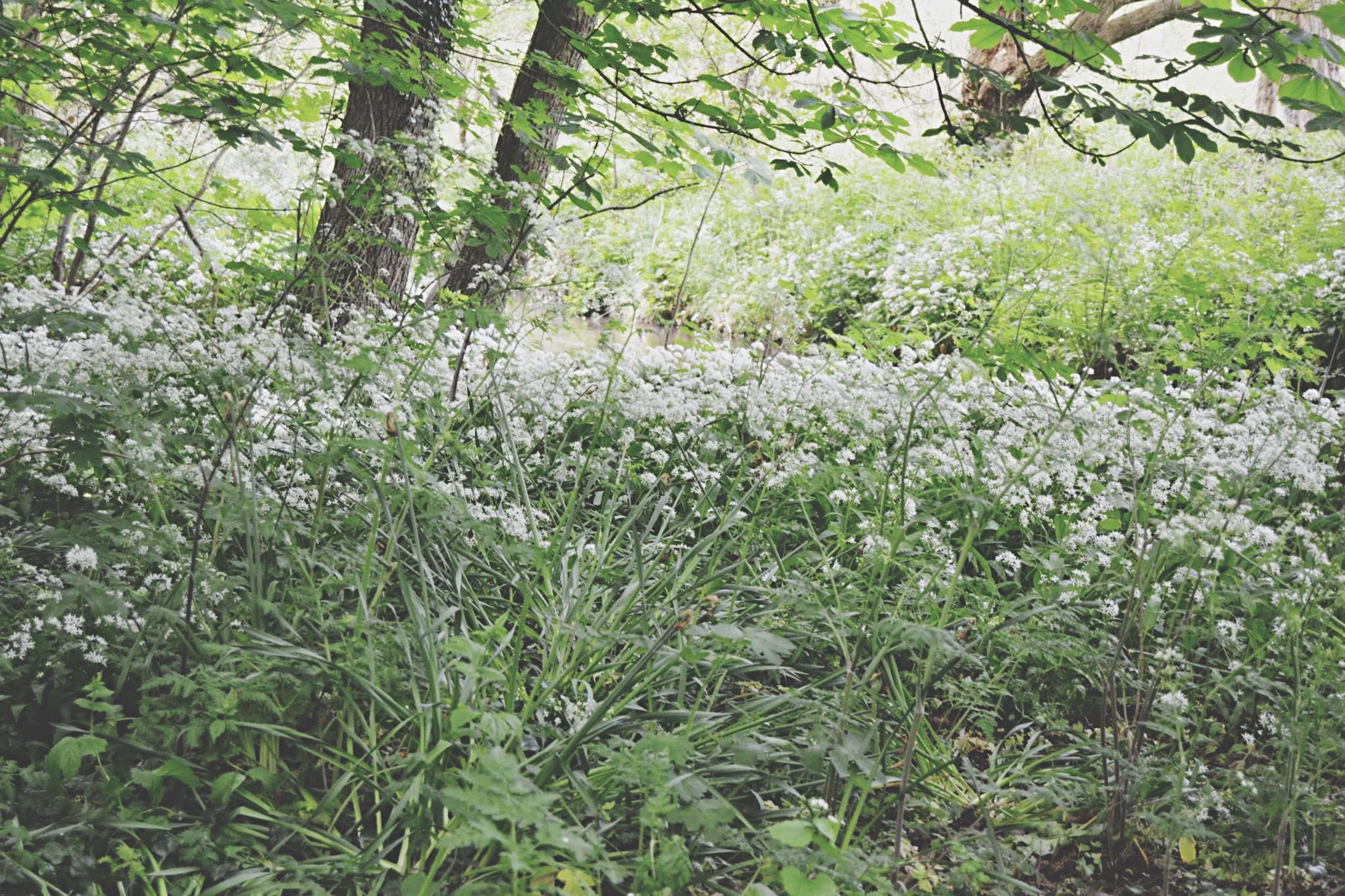 growth, tree, plant, green color, beauty in nature, nature, tranquility, branch, tranquil scene, flower, grass, forest, day, lush foliage, freshness, scenics, outdoors, growing, field, no people