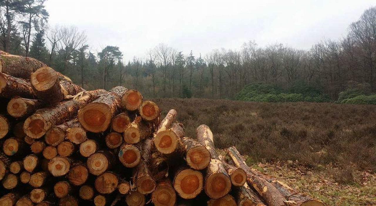 stack, log, timber, deforestation, lumber industry, wood - material, woodpile, large group of objects, heap, abundance, fossil fuel, environmental issues, tree, forestry industry, day, nature, no people, fuel and power generation, landscape, outdoors, sky