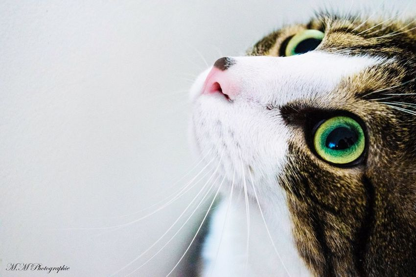 Cats Chat Yeux Amour Miaou 📷📸